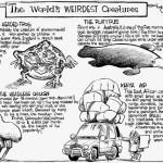 The World Weirdest Animals