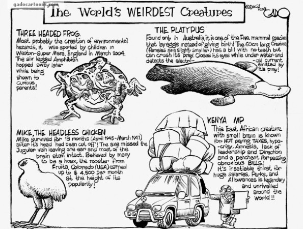The World Weirdest Animals