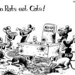 When Rats eat Cats… #Makueni #MCA's #Impeachment